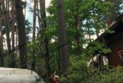 Спил деревьев арбористом в Истре